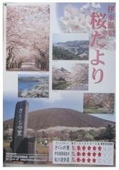 4月5日桜開花_JALAN_190405.jpg