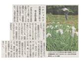 花しょうぶ開花_JALAN_190613.jpg