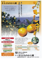 みかん狩り_JALAN_191002.jpg