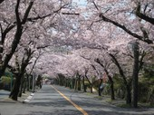 桜並木5_JALAN_200221.jpg